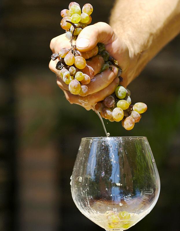 Tast de vi blanc